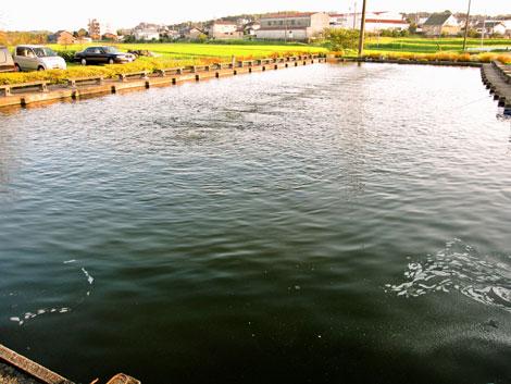 十三塚釣堀の池その1